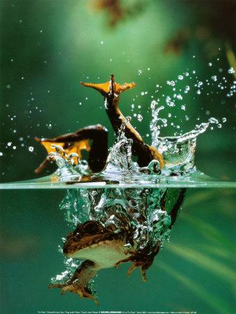Tim Flach Frog under water