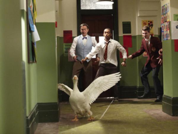 2 wild goose chase