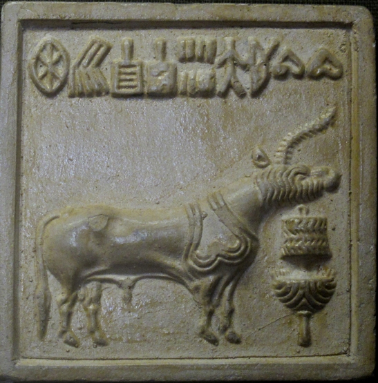 11 cattle with script