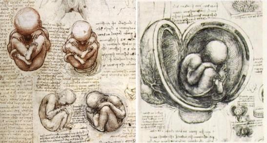 7 Leonardo fetus