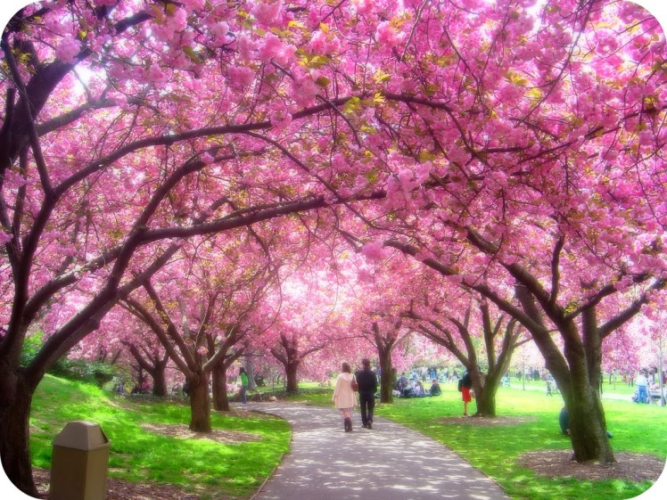 8 Plumb blossom