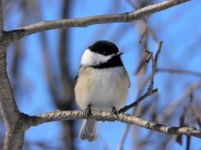 9 Bird on a tree