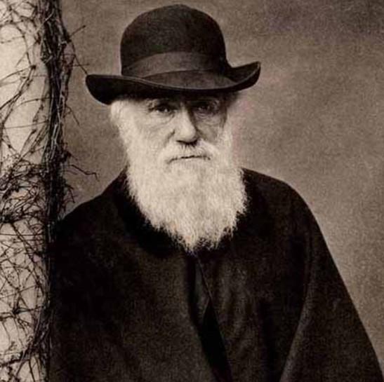 3 Darwin