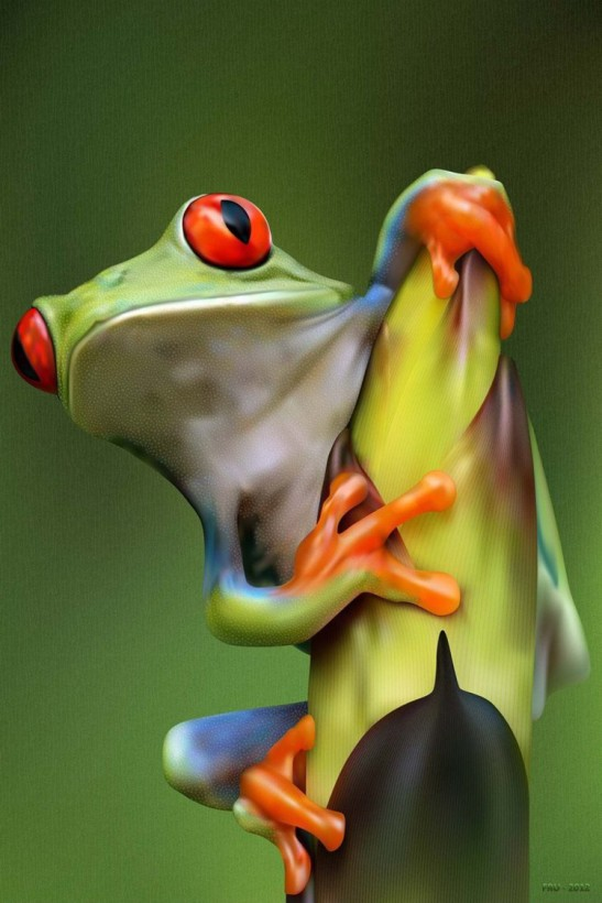5 red eyed tree frog
