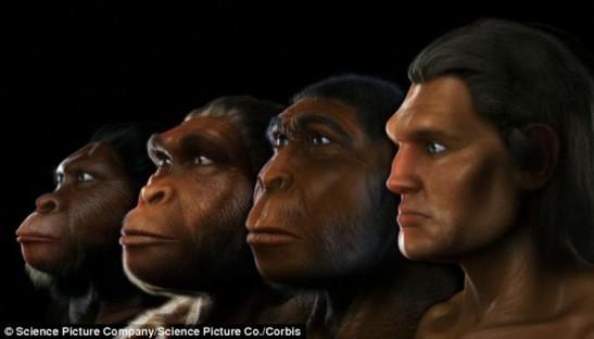 7 evolution of humans