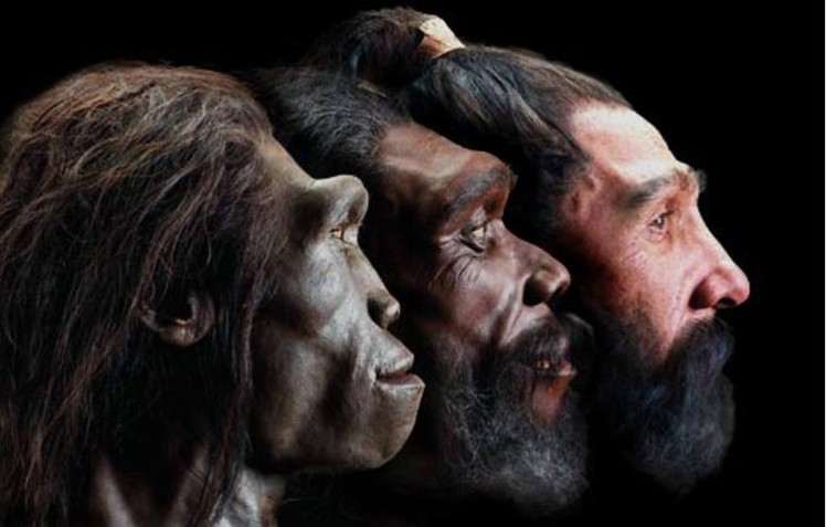 1 Evolution