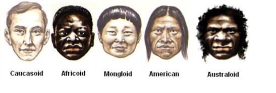3 Human races