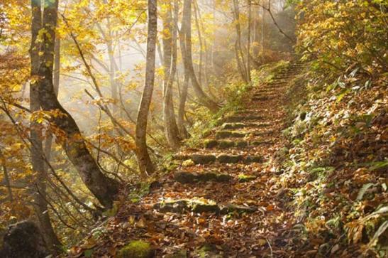 3 The narrow road