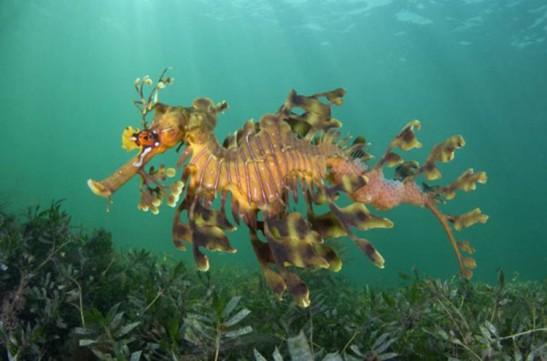 1a seahorse