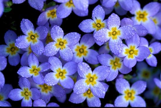 5b wildflower