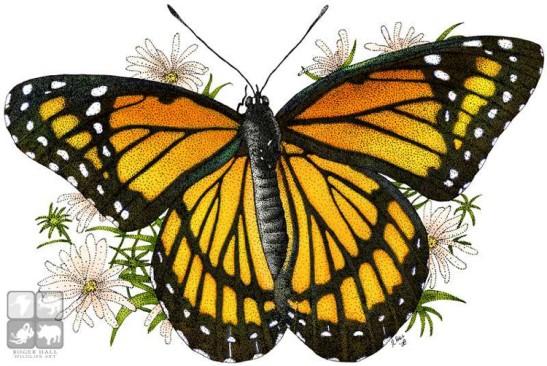 1-viceroy-butterfly