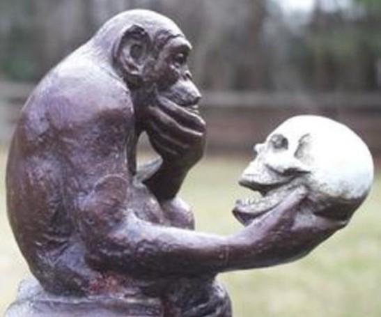 8-thinking-ape