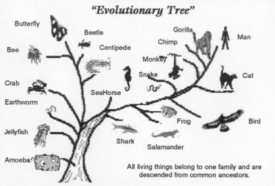 1-evolutionary-tree