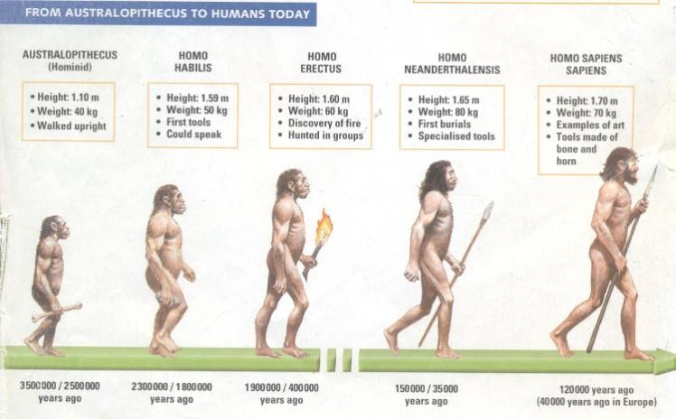2-human-evolution